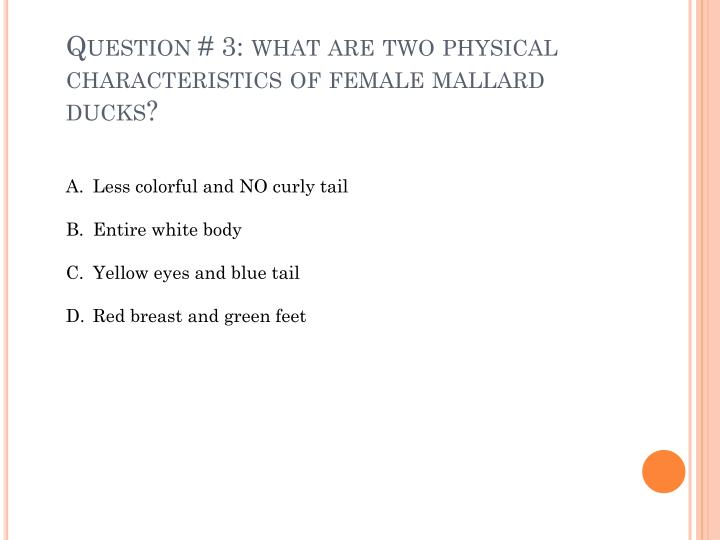 Question # 3: what are two physical characteristics of female mallard ducks?