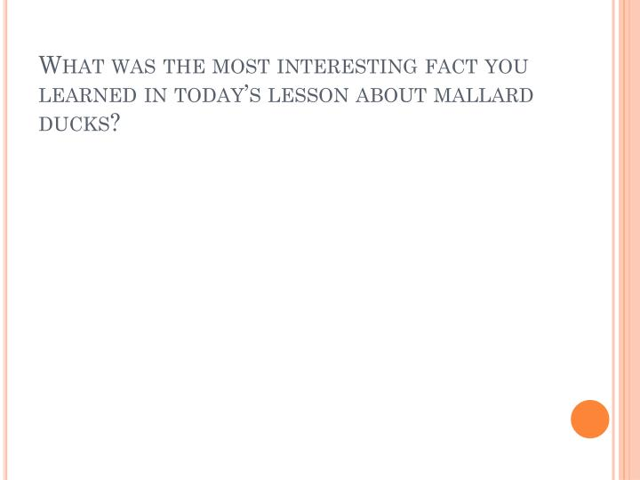 What was the most interesting fact you learned in today's lesson about mallard ducks?
