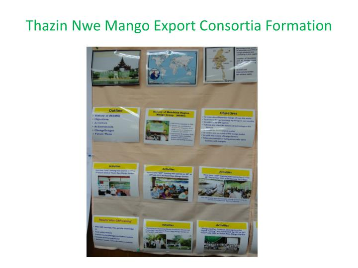 Thazin nwe mango export consortia formation