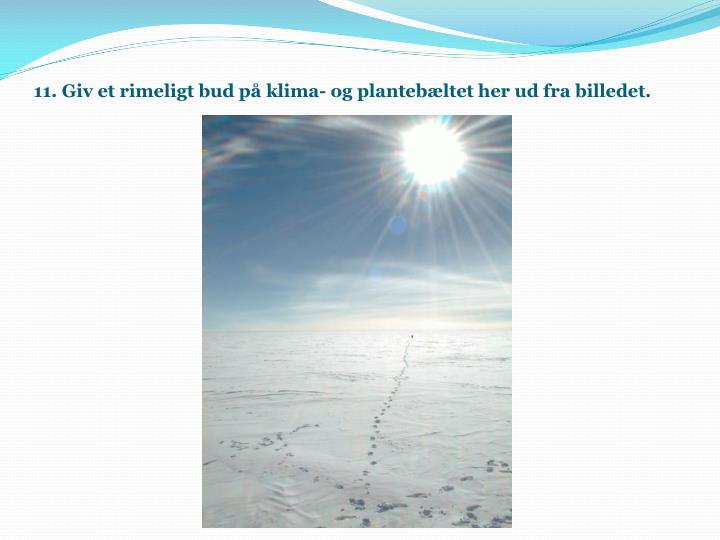 11. Giv et rimeligt bud på klima- og plantebæltet her ud fra billedet.