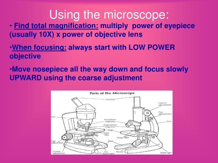 Using the microscope: