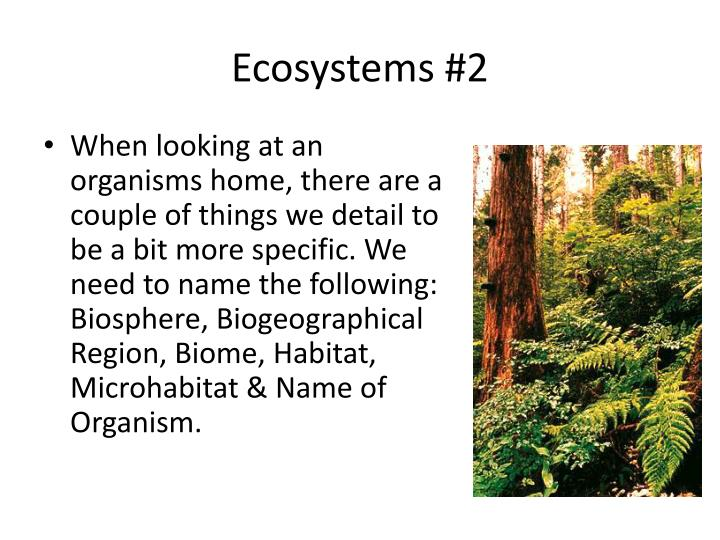 Ecosystems #2