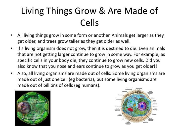 Living Things Grow & Are Made of Cells