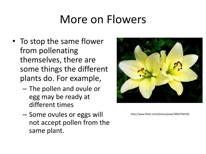 More on Flowers