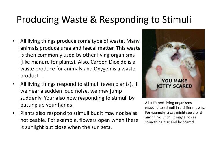 Producing Waste & Responding to Stimuli
