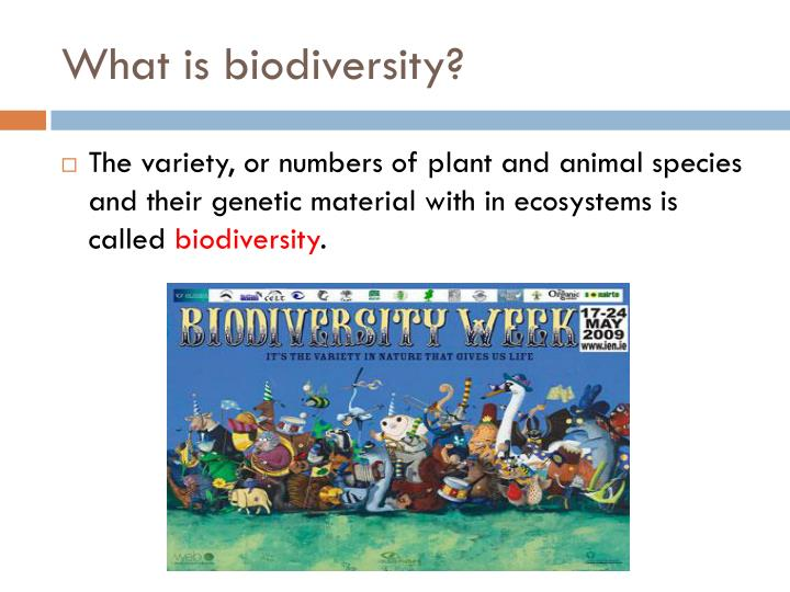 What is biodiversity?
