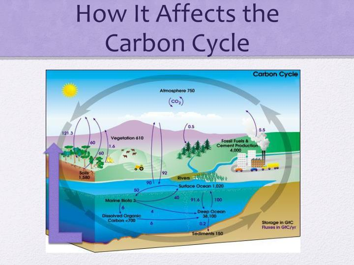How It Affects the Carbon Cycle