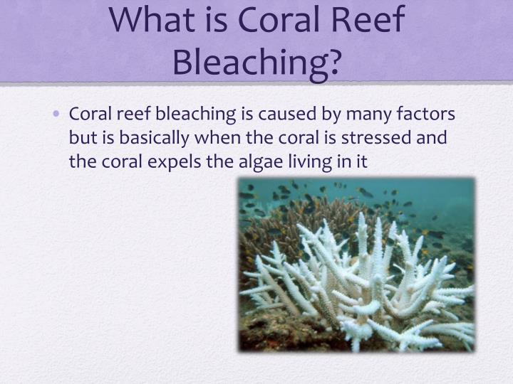 What is coral reef bleaching