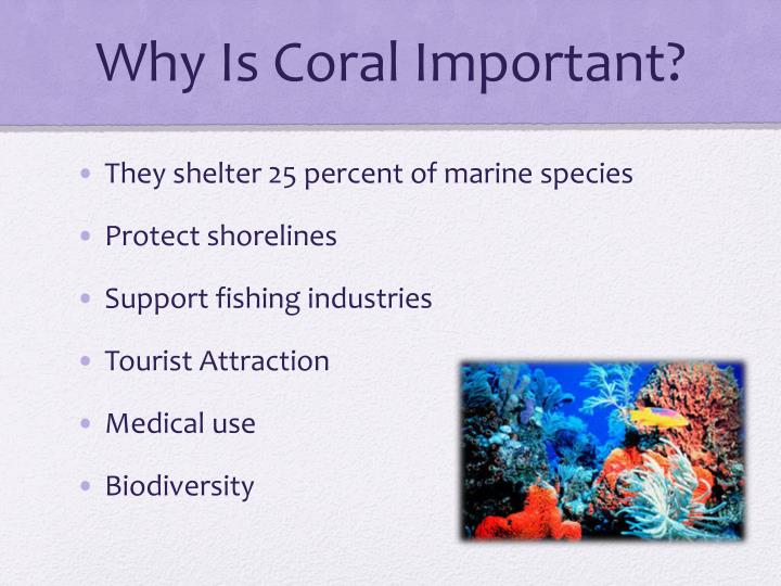 Why is coral important
