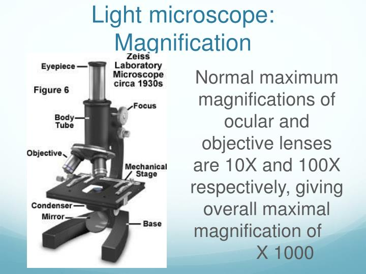 Light microscope: Magnification