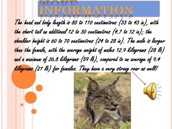 More Information