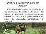 o lobo e a sua conserva o em portugal10