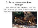 o lobo e a sua conserva o em portugal8