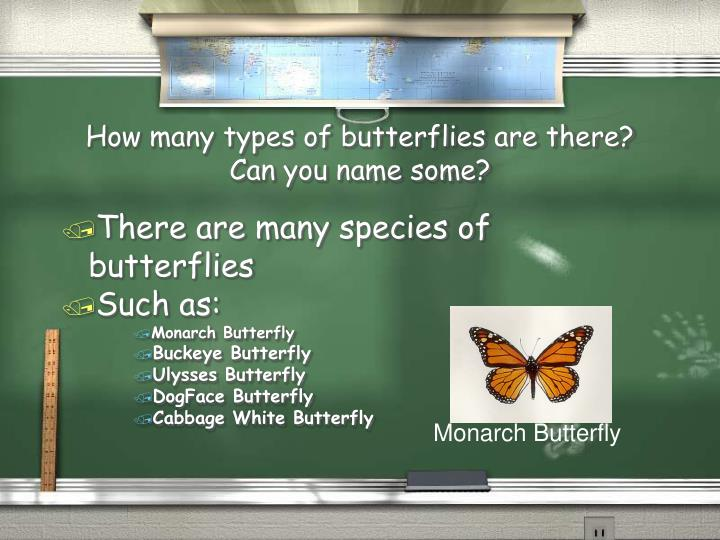 How many types of butterflies are there can you name some