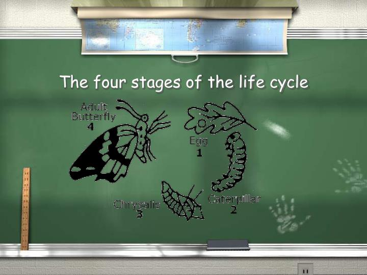 The four stages of the life cycle