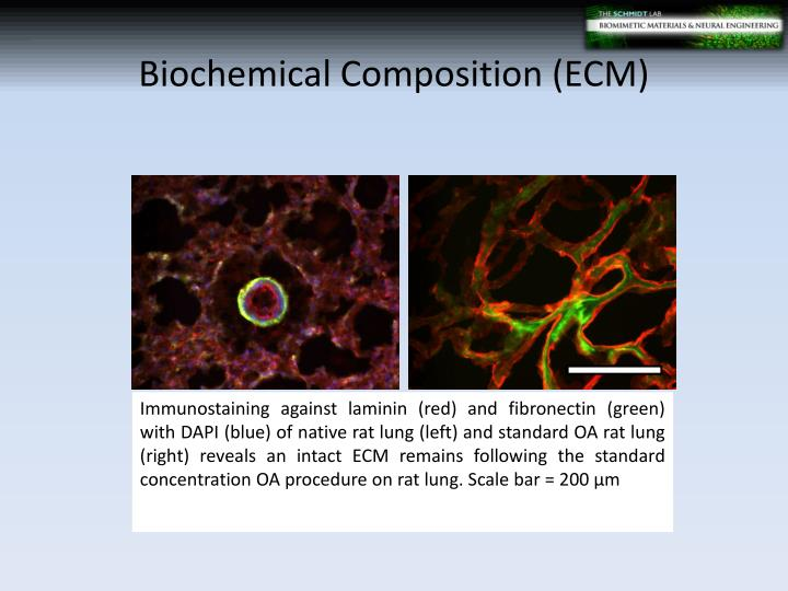 Biochemical Composition (ECM)
