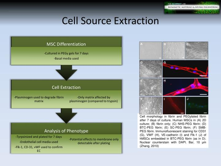 Cell Source Extraction