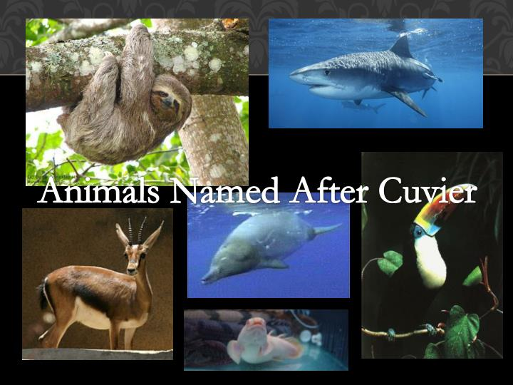 Animals Named After Cuvier