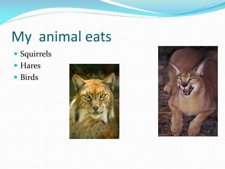 My  animal eats