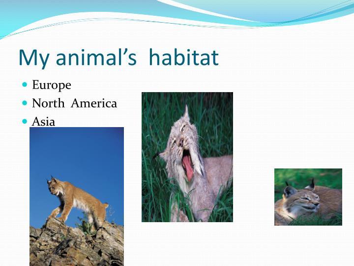 My animal's  habitat