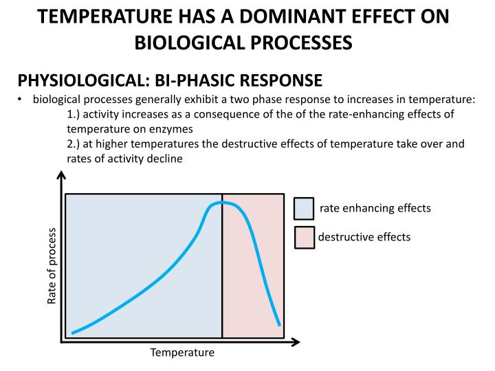TEMPERATURE HAS A DOMINANT EFFECT ON BIOLOGICAL PROCESSES