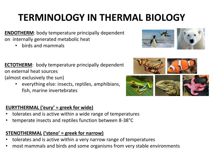 TERMINOLOGY IN THERMAL BIOLOGY