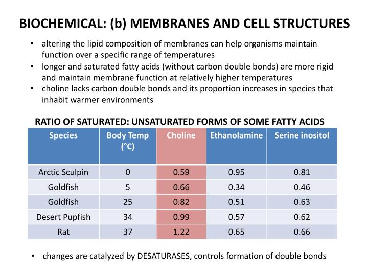 BIOCHEMICAL: (b) MEMBRANES AND CELL STRUCTURES