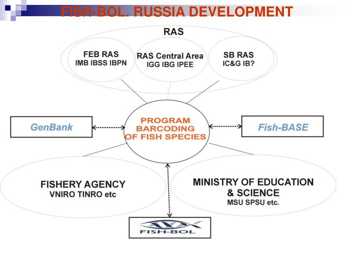 FISH-BOL. RUSSIA DEVELOPMENT