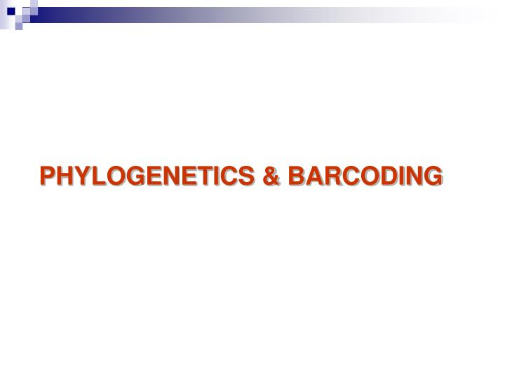 PHYLOGENETICS & BARCODING