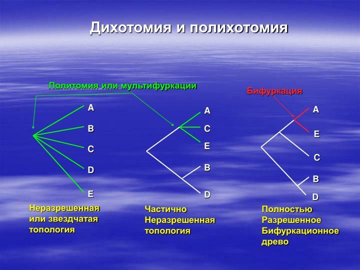 Дихотомия и полихотомия
