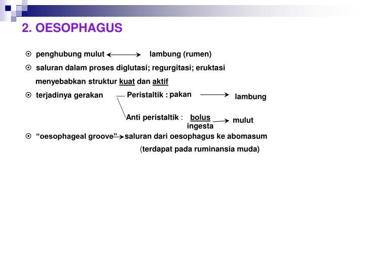2. OESOPHAGUS