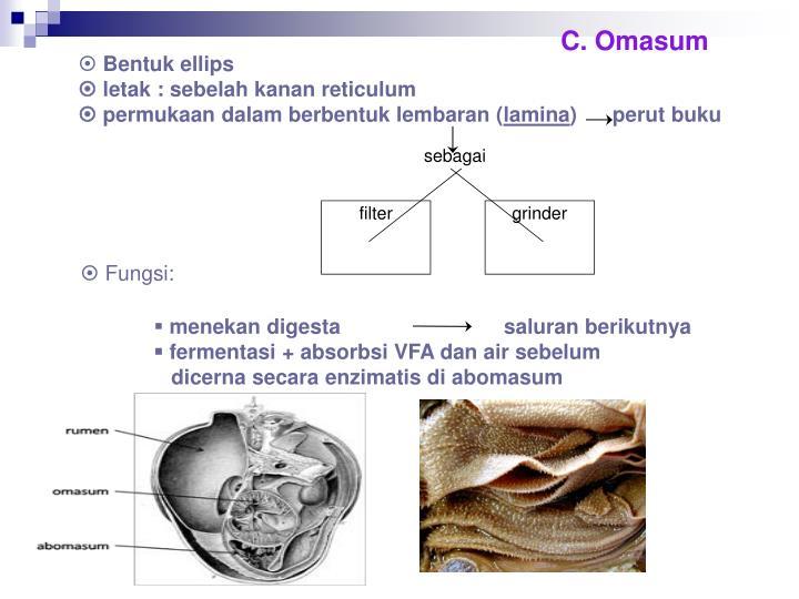 C. Omasum
