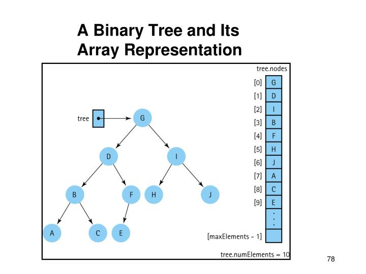 A Binary Tree and Its