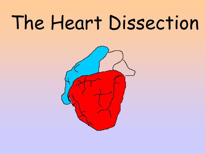The Heart Dissection