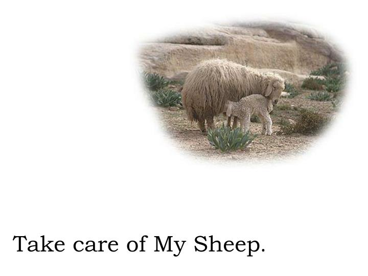 Take care of My Sheep
