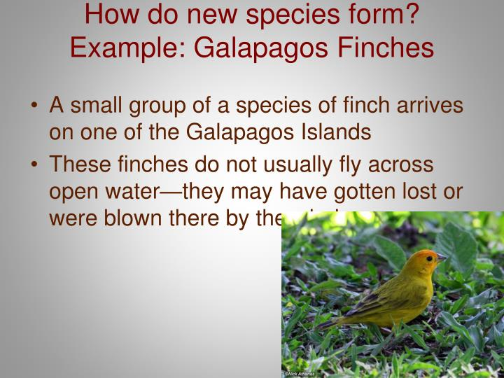How do new species form?