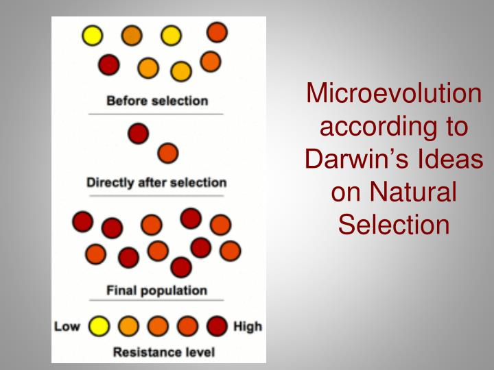 Microevolution according to Darwin's Ideas on Natural Selection