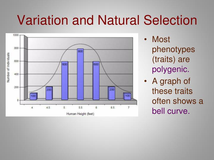 Variation and Natural Selection