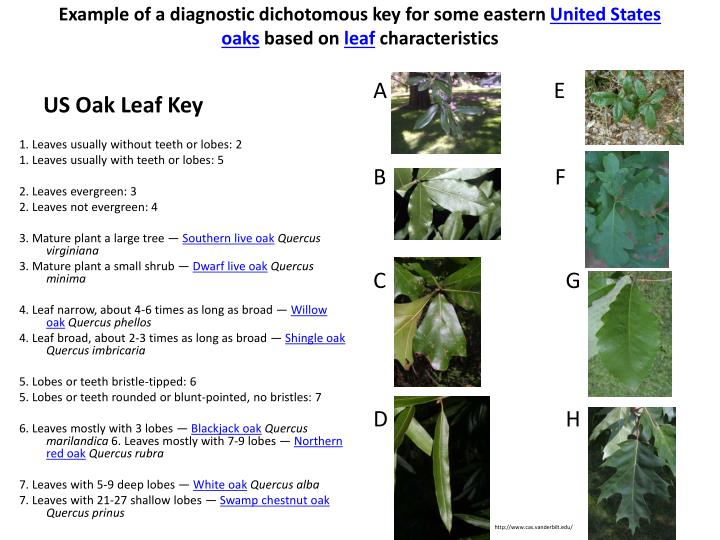 Example of a diagnostic dichotomous key for some eastern