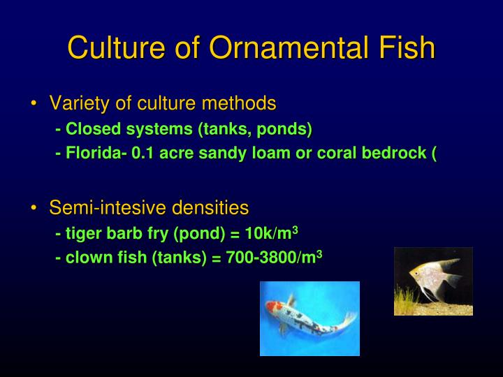 Culture of Ornamental Fish