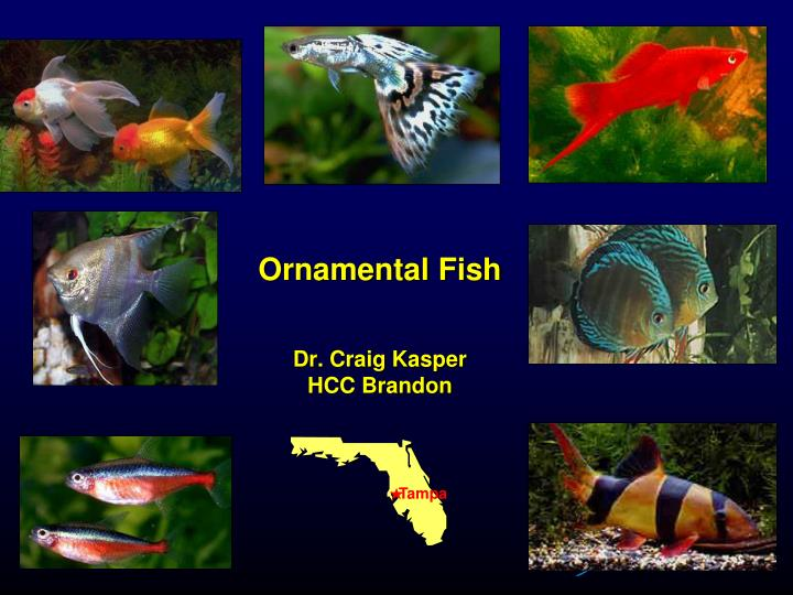 Ornamental fish dr craig kasper hcc brandon