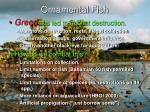 ornamental fish4