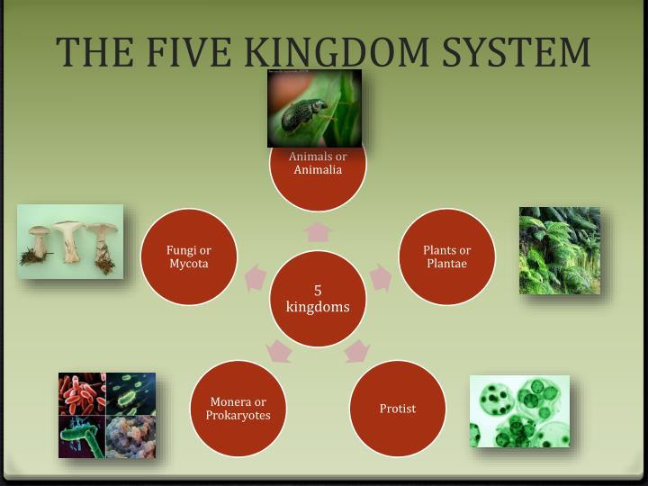 THE FIVE KINGDOM SYSTEM