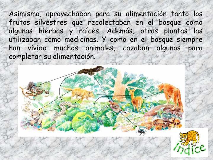 Asimismo, aprovechaban para su alimentación tanto los frutos silvestres que recolectaban en el bosque como algunas hierbas y raíces. Además, otras plantas las utilizaban como medicinas. Y como en el bosque siempre han vivido muchos animales, cazaban algunos para completar su alimentación.