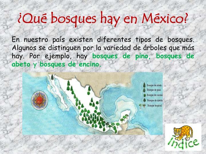 ¿Qué bosques hay en México?