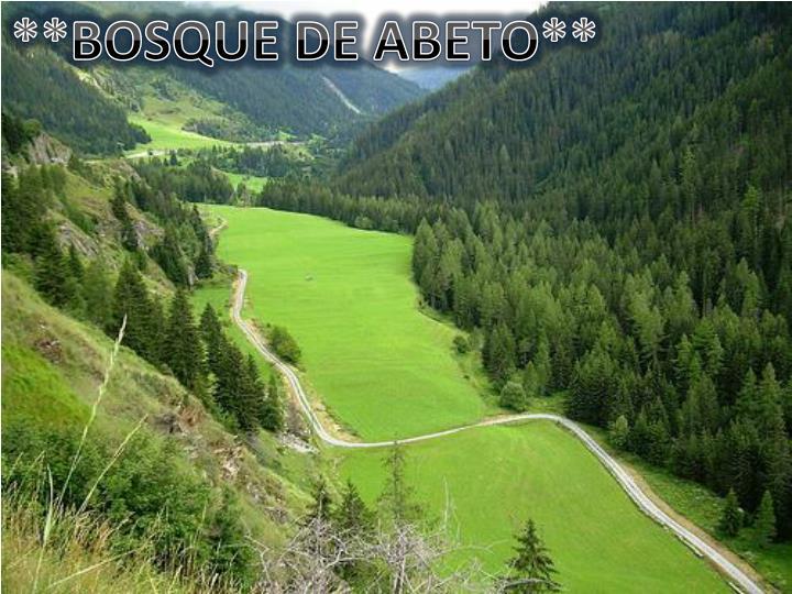 **BOSQUE DE ABETO**