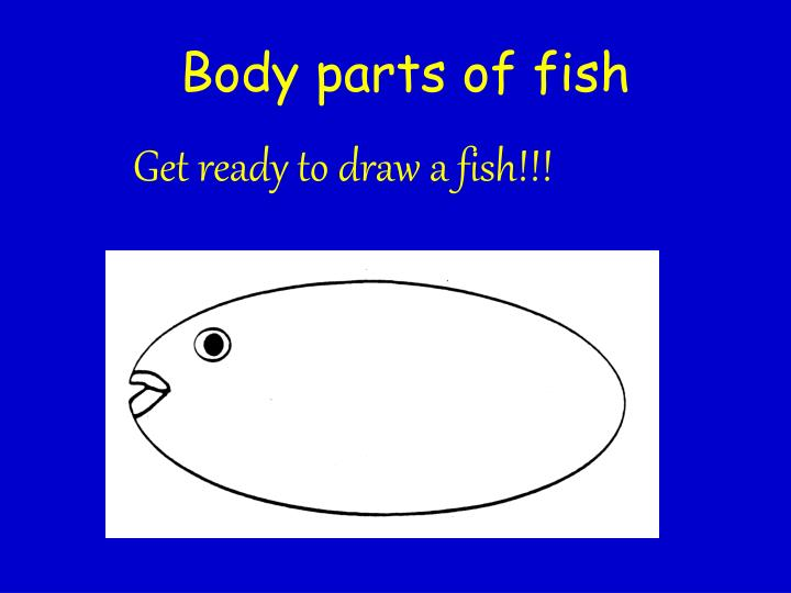 Body parts of fish