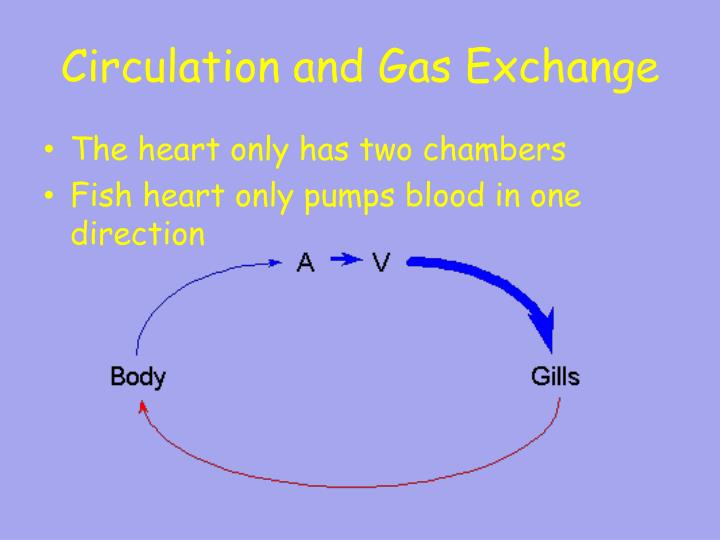 Circulation and Gas Exchange