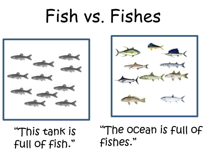 Fish vs. Fishes