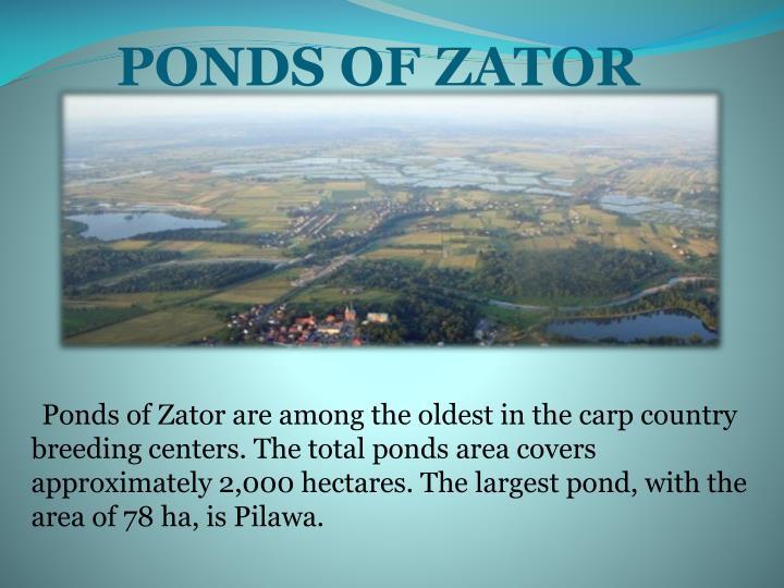 PONDS OF ZATOR